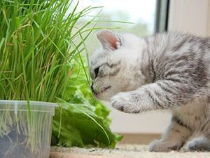 Зеленые ростки полезны для Ваших домашних животных